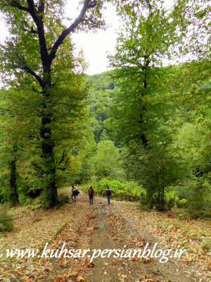 جنگل توسه رود