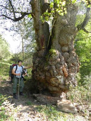 جنگل واز