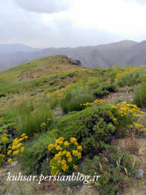 روستای میر طالقان
